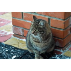 IMG02423_Cats