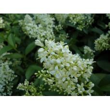 DSC03361_Flowers