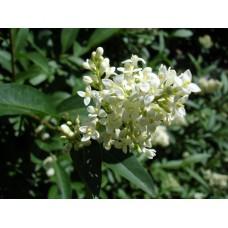 DSC03362_Flowers