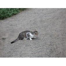 DSC03782_Cats