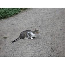 DSC03783_Cats