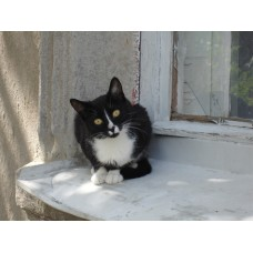 DSC04107_Cats