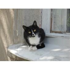 DSC04108_Cats