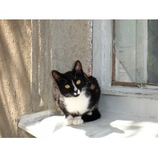 DSC04109_Cats