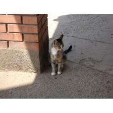 DSC04511_Cats