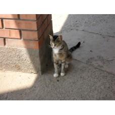 DSC04512_Cats