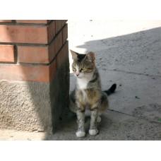 DSC04513_Cats