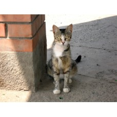 DSC04516_Cats