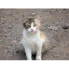 DSC04795_Cats