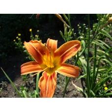 DSC02488._Flowers