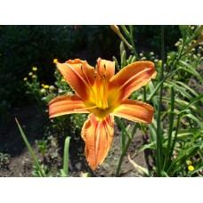 DSC02489_Flowers