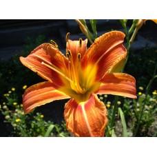 DSC02490_Flowers