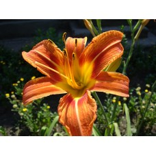 DSC02491_Flowers