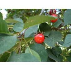 DSC02494_Fruits