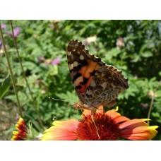 DSC02615_Butterflies