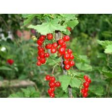 DSC03237_Fruits