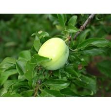 DSC03242_Fruits