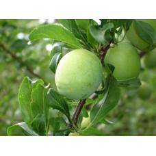 DSC03243_Fruits