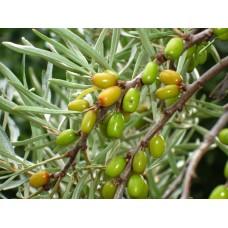 DSC03244_Fruits