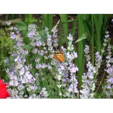 DSC03335_Butterfly