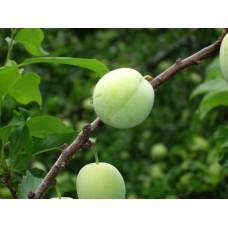 DSC03348_Fruits
