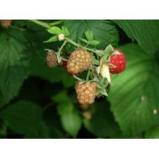 DSC03420_Fruits
