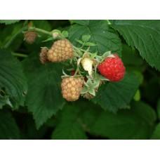 DSC03421_Fruits
