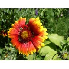 DSC03607_Flowers