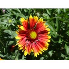 DSC03609_Flowers