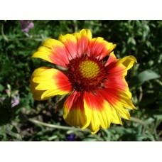 DSC03610_Flowers