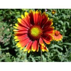 DSC03611_Flowers