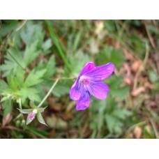 DSC05285_Field_flowers