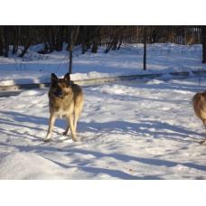 DSC06498_Dogs