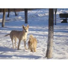DSC06500_Dogs