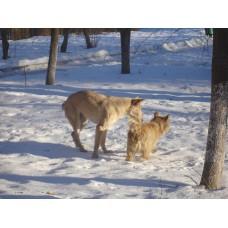 DSC06501_Dogs