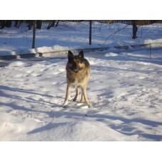 DSC06503_Dogs