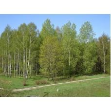 DSC09801_Trees