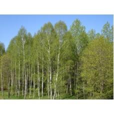 DSC09802_Trees