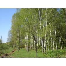 DSC09806_Trees