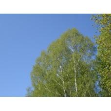DSC09807_Trees