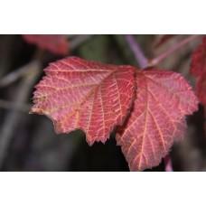 IMGP1997_Autumn_leaves