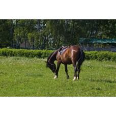 IMGP5077_Horses
