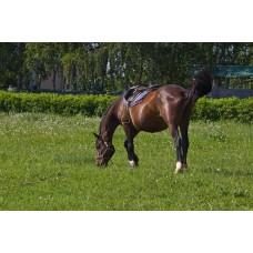 IMGP5078_Horses