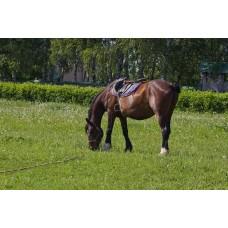 IMGP5079_Horses