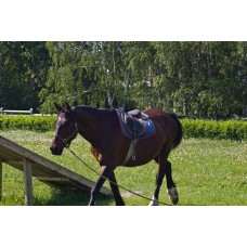 IMGP5080_Horses