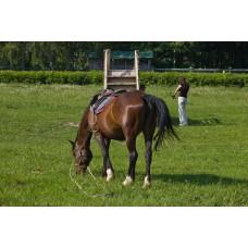 IMGP5082_Horses