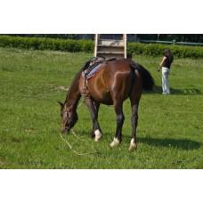 IMGP5083_Horses