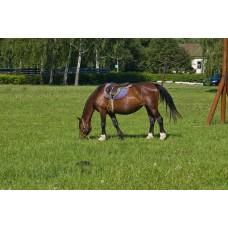 IMGP5084_Horses