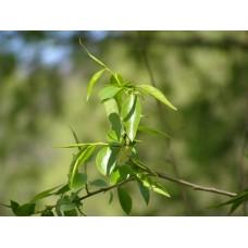 P5041583_Leaves