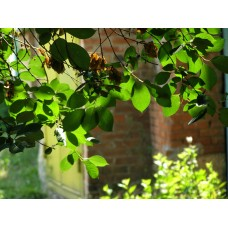 P6163205_Leaves